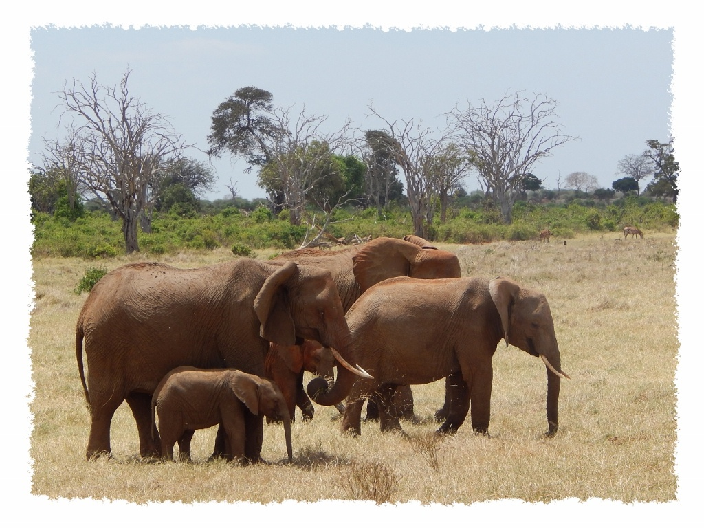 Elefanten im Tsavo East Nationalpark, Kenia