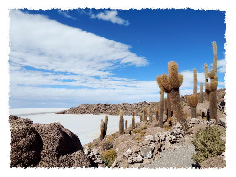 Uyuni - Aussicht von Isla Incahuasi