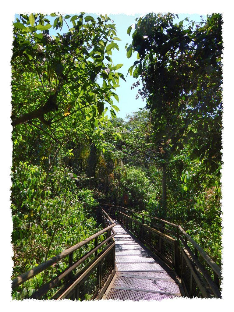 Wege durch den Iguazú Nationalpark