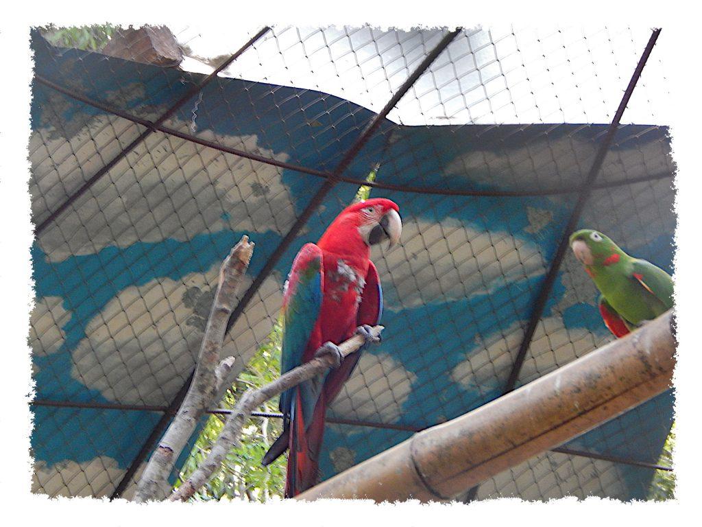 Iguazú - Guira Oga Papagei