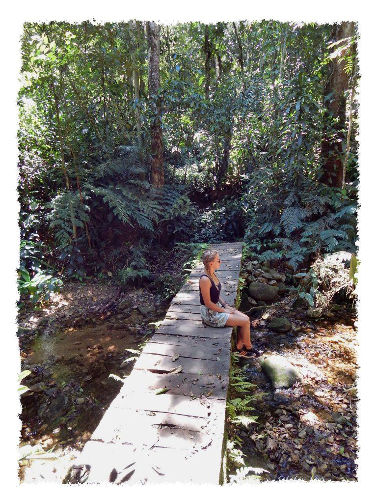Holzweg im Tijuca Nationalpark in Rio de Janeiro