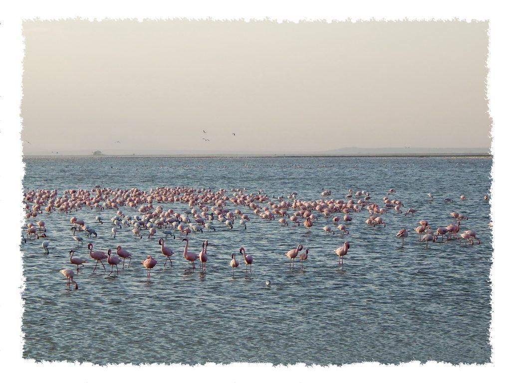 Amboseli Nationalpark - Flamingos