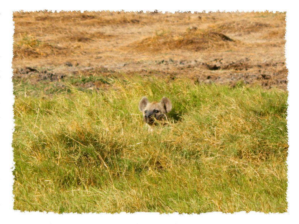 Amboseli Nationalpark - Hyäne