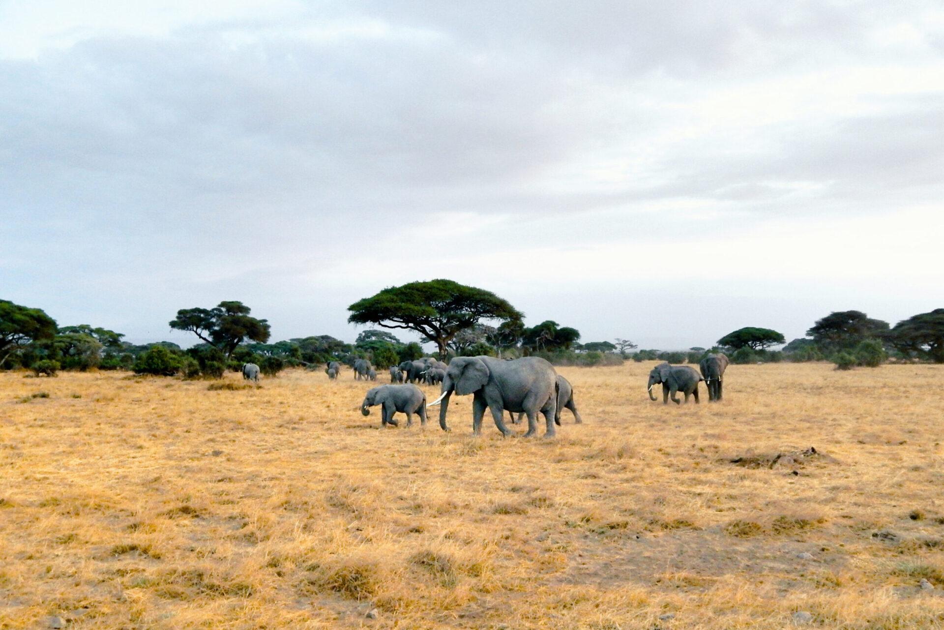 Thumbnail - Amboseli Nationalpark