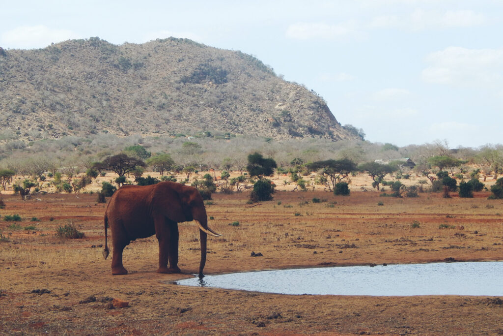 Elefanten im Tsavo East Nationalpark in Kenia