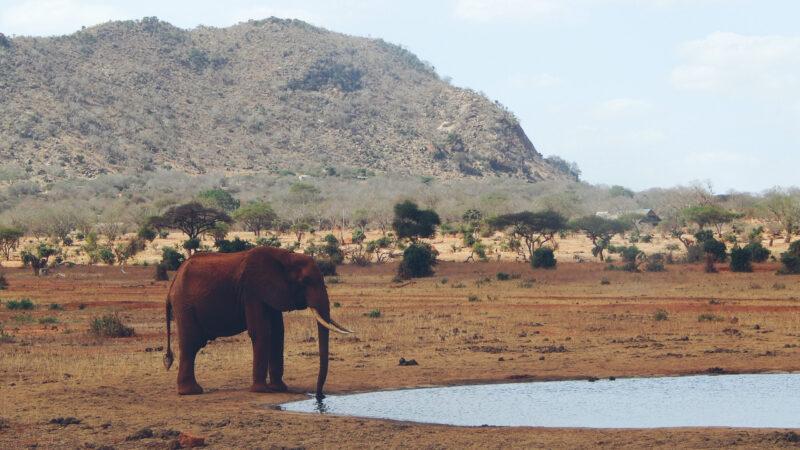 Elefanten im Tsavo East Nationalpark in Kenia