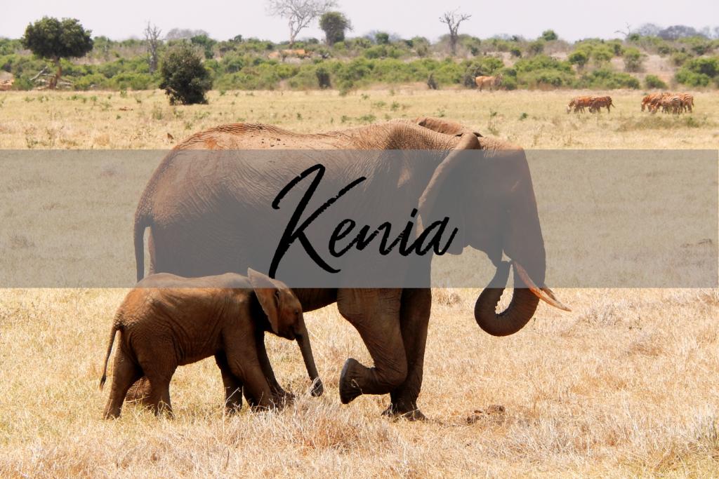 Kenia Elefant mit Baby