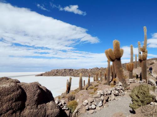 Bolivien - Isla Incahuasi