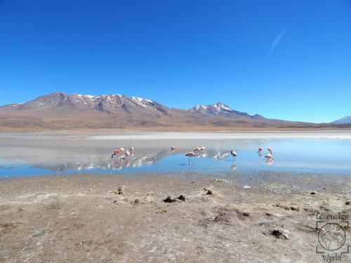 Bolivien - Laguna Hedonda