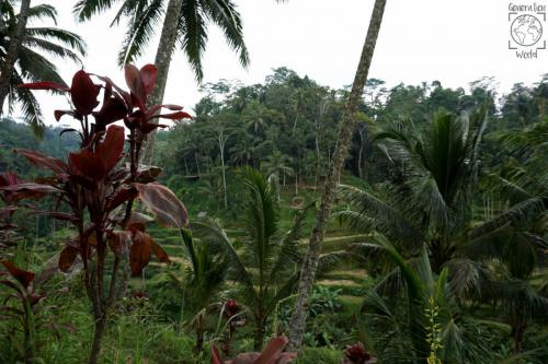Indonesien - Bali Tegallalang Reisterassen