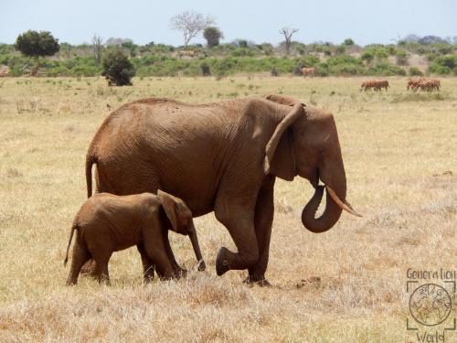 Kenia - Amboseli