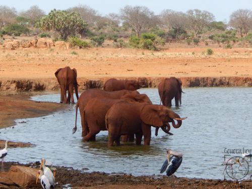 Kenia - Tsavo East